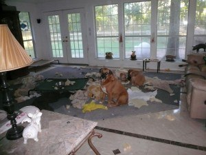 night of destruction, with Mollie, Brie, Sandy and Biscotti