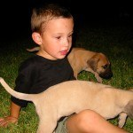Dante, my grandson, with Great Dane Puppies