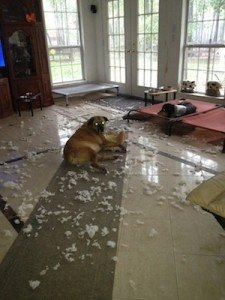 Mollie, a good dog, but not today